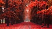 easy way in the park (romantic color autumn)