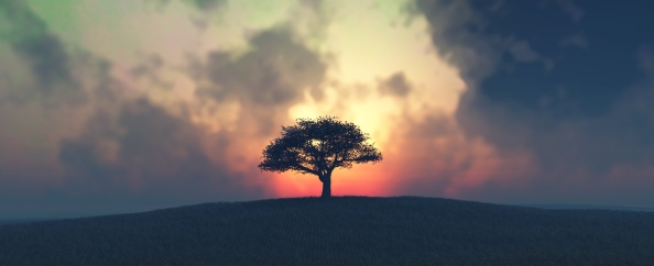 sunset and tree in field
